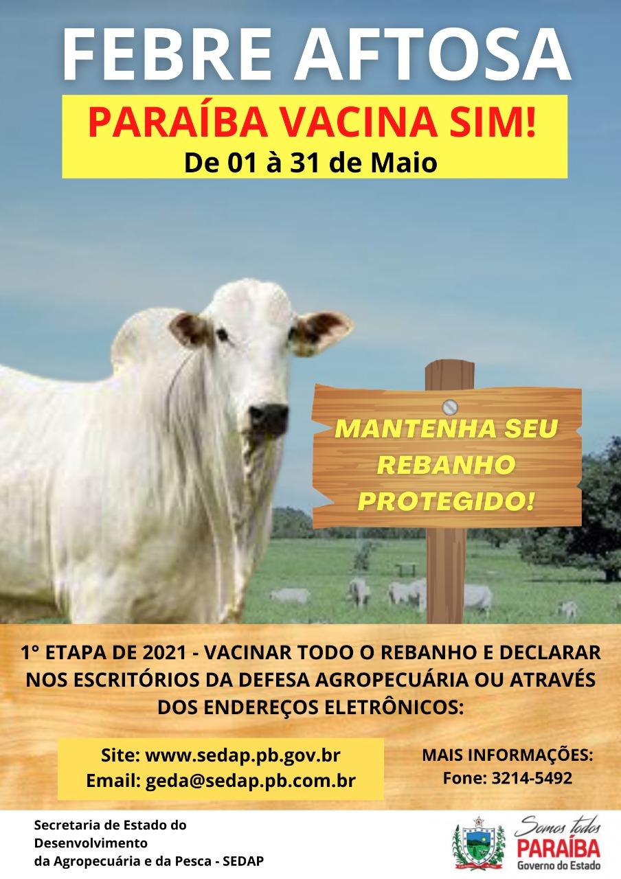 Prefeitura de Borborema inicia campanha de vacinação contra febre aftosa